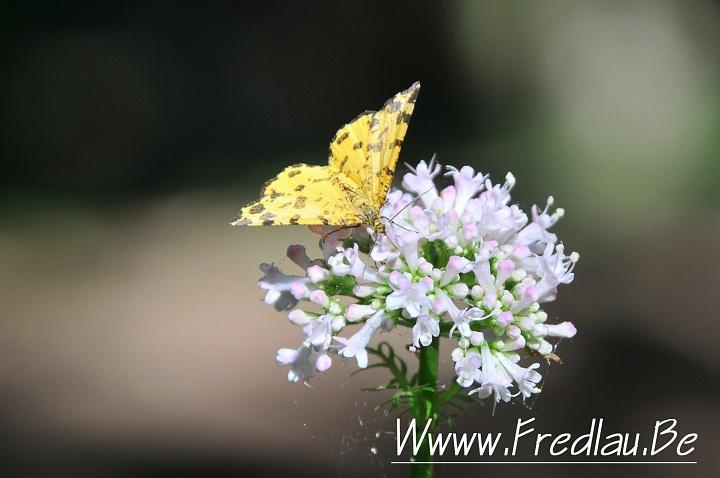 www-fredlau-be-serie-4-fr-rasso-2009-dsc_6158